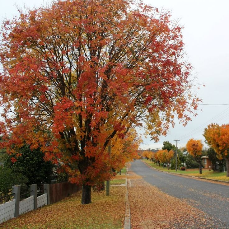 So many beautiful colours in Tenterfield - almost over but we have had the prettiest autumn.  #startthedaywithsomethingbeautiful