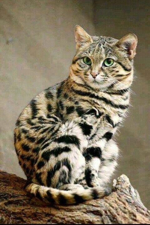 Pin By Anita Jann On Cats
