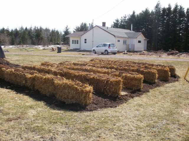 Permaculture - Red Sand Cottage - straw bale garden