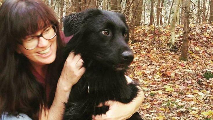 Un chien de Sackville, au Nouveau-Brunswick, passe pour un héros dans la municipalité après avoir retrouvé un chat disparu depuis six semaines.