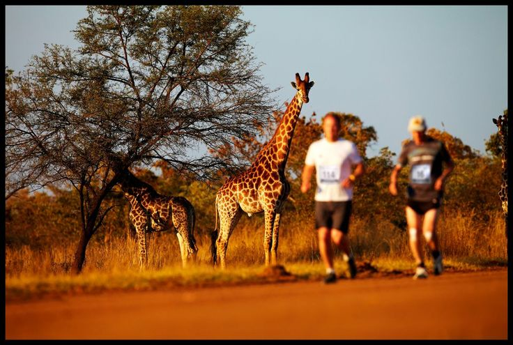 The Big Five Marathon in South Africa.