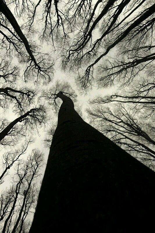Baum – Bilder