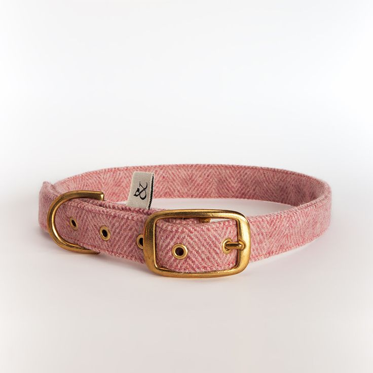 For a luxury dog collar that is beautifully soft and ultra stylish, you can't go past this pure wool number by Spanish brand Wool & Dogs.
