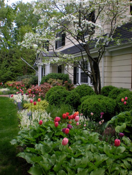 Traditional spring landscape at front entrance of home  Plant bulbs in the midst of hostas - the bulb leaves will disappear when they start to fade