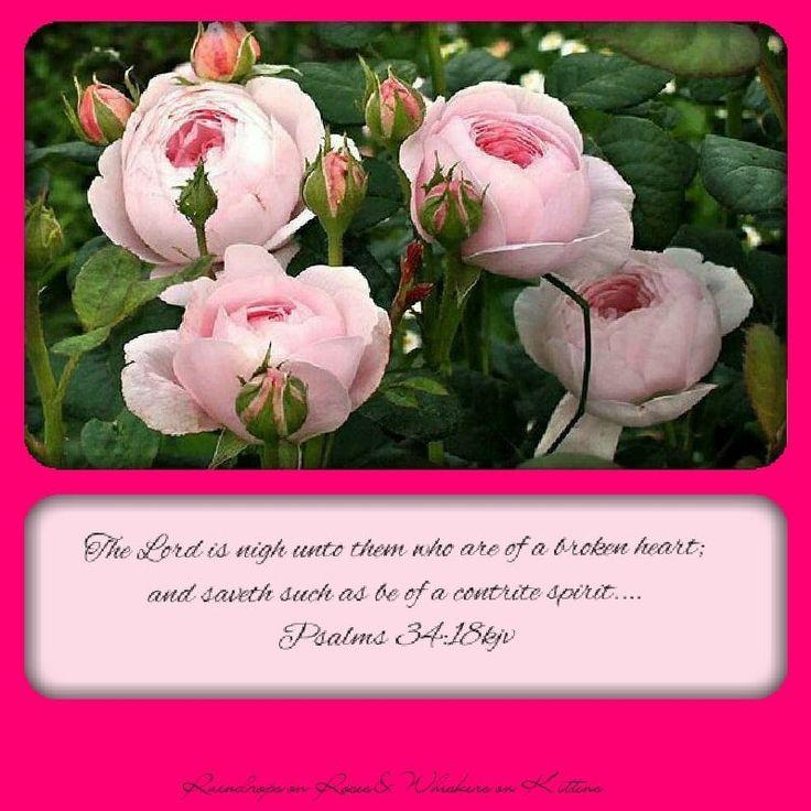 Pin by Linda Herrera on Jesus, Lord of my life! | Rose ...