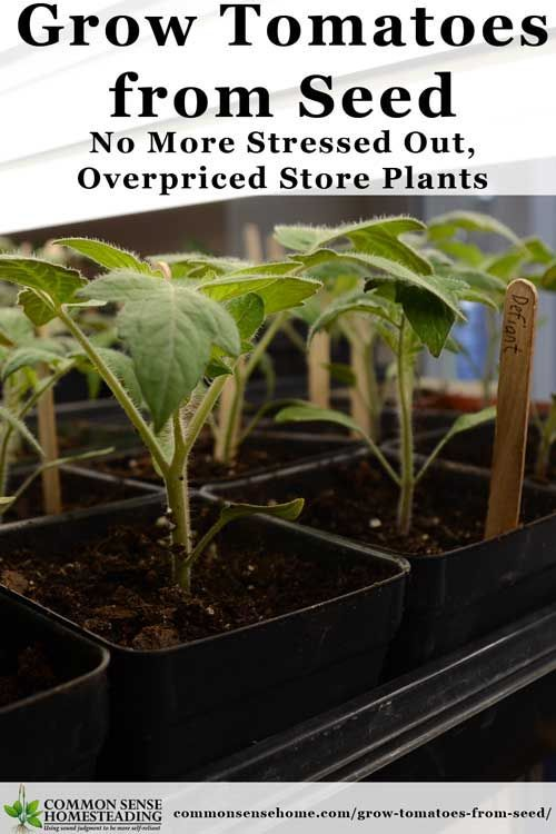 How to Grow Tomatoes from Seed - Save money and grow more varieties by starting your own tomato plants. Tips for soil, containers, transplanting and trouble: