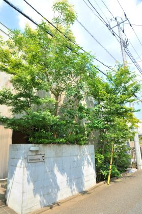 雑木の庭つくり日記@高田造園設計事務所 わずか40センチの幅の緑地帯の緑が、こうして住環境を木陰にし、カーテンいらずの暮らしの環境をつくり、そして街にも潤いを提供するのです。 狭いからと言って、低木ばかり植えても住環境は豊かに潤うことはありません。環境をよくする植栽には、それなりの方法があるのです。