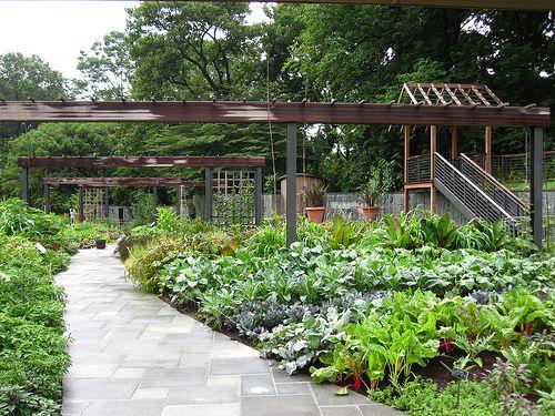 Pin by julie lk on garden pinterest for Kitchen garden plants
