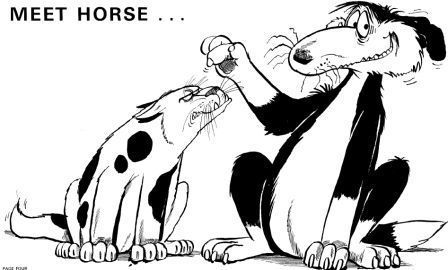 Horse and the dog - footrot flats