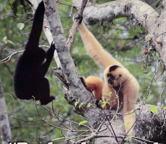 Affen im Cat Tien Nationalpark - #AsiaticaReisen