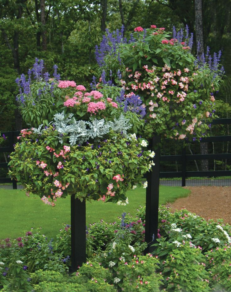 Hanging Flower Baskets Calgary : Best images about petunia tree on trees