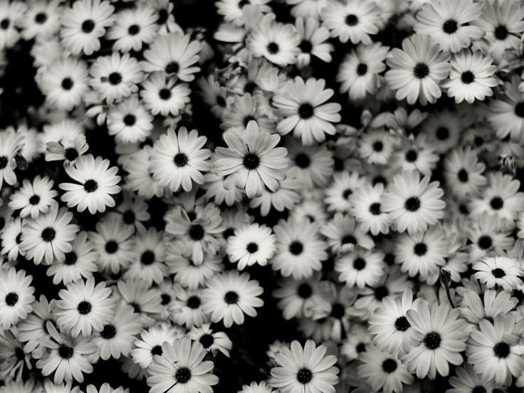 Pictures of black and white flowers google search