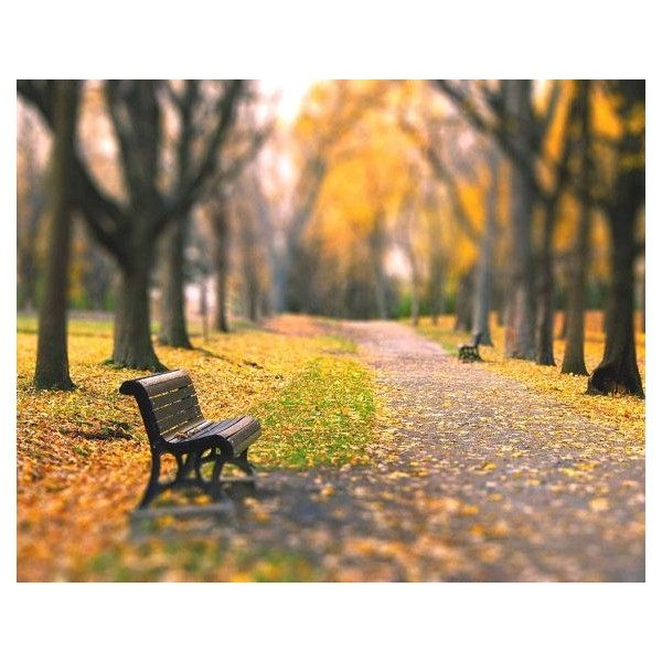 Fall landscape, nature, yellow golden trees, woodland, home decor wall... ❤ liked on Polyvore featuring home, home decor, wall art, backgrounds, art, fall, fillers, inspiring, landscape wall art and metallic wall art