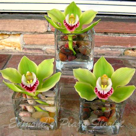3 Square Vases With River Rocks And A Cymbidium Orchid In Each Flower Arranging And