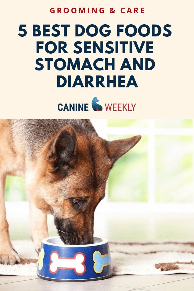 5 Best Dog Foods For Sensitive Stomach And Diarrhea Dogs