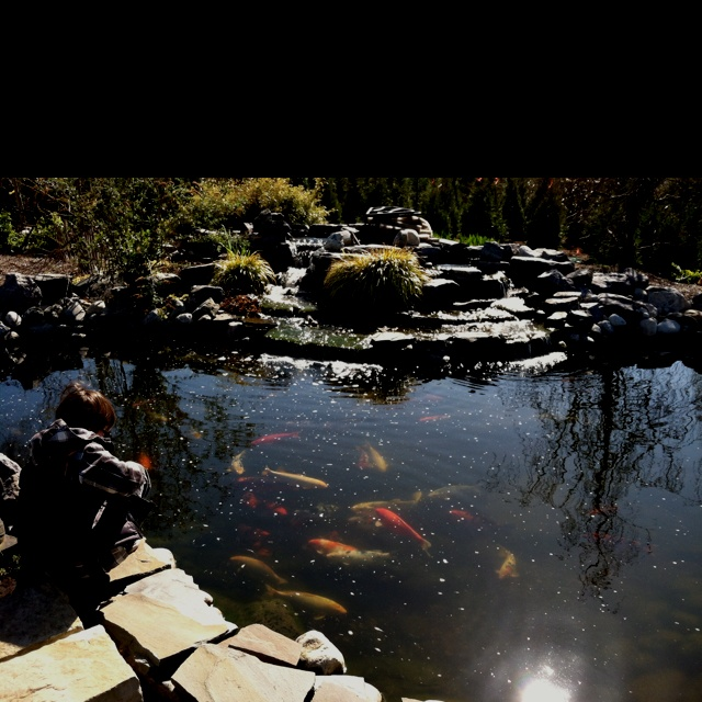 Pin by mary merrill on country and farm living pinterest for The koy pond
