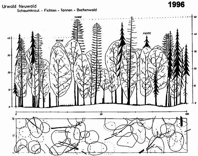 lichens in forest stratification - Szukaj w Google
