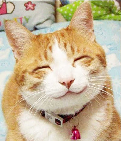43 best images about Happy Cat on Pinterest | Happy ...