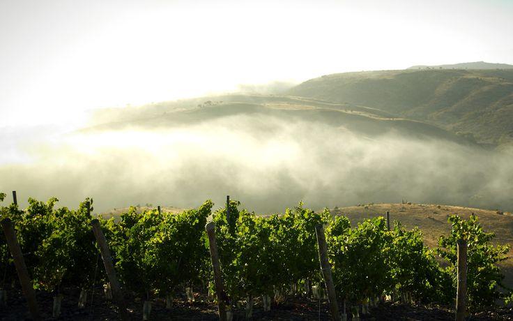 Tabalí ‹ Limarí Valley