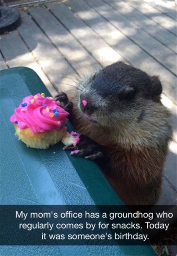 Happy day for this little groundhog.