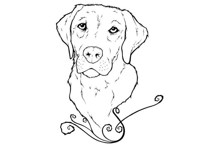 27 Amazing Picture Of Golden Retriever Coloring Page Albanysinsanity Com Dog Coloring Page Puppy Coloring Pages Animal Coloring Pages