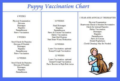 Think, that adult dog vaccination schedule