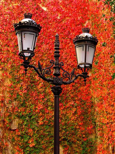 glorious color. vines. fall. autumn. lamps. red. orange. green.