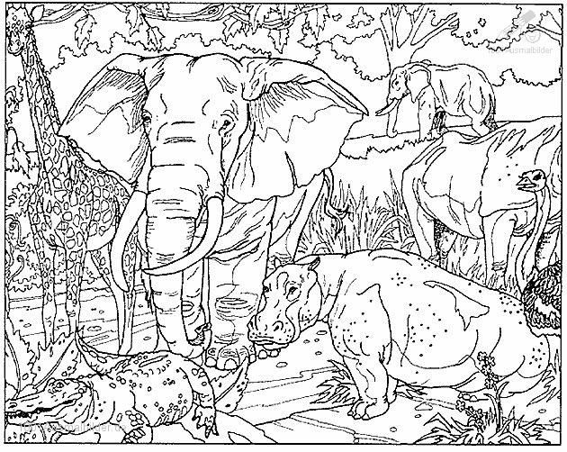 malvorlageelefant13 630×502  malvorlagen