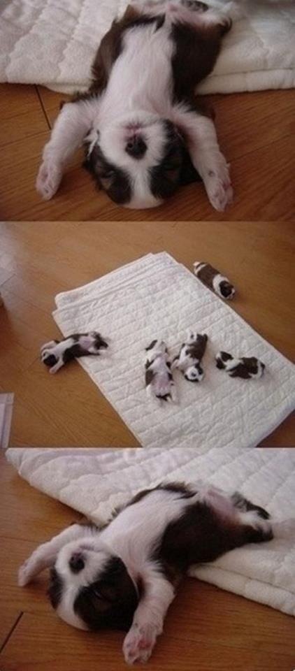 Cachorritos durmiendo xd