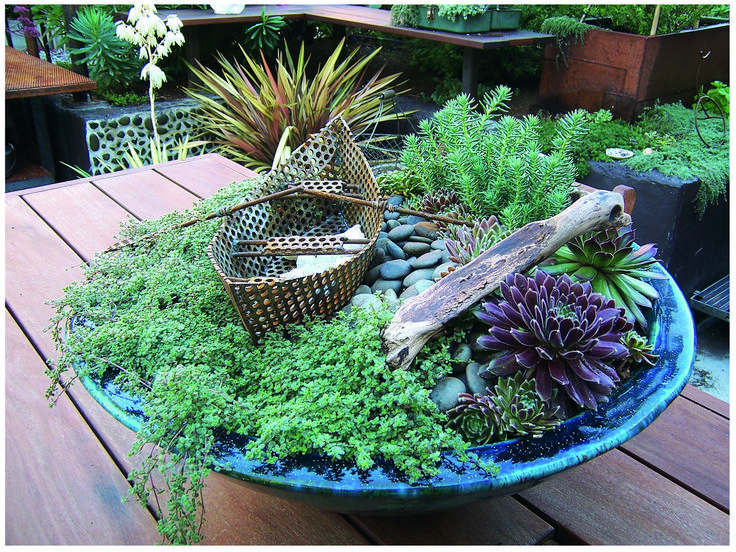 Inside a simple bowl are succulents pebbles a piece of driftwood wooly thyme and a witty - Succulent container gardens debra lee baldwin ...