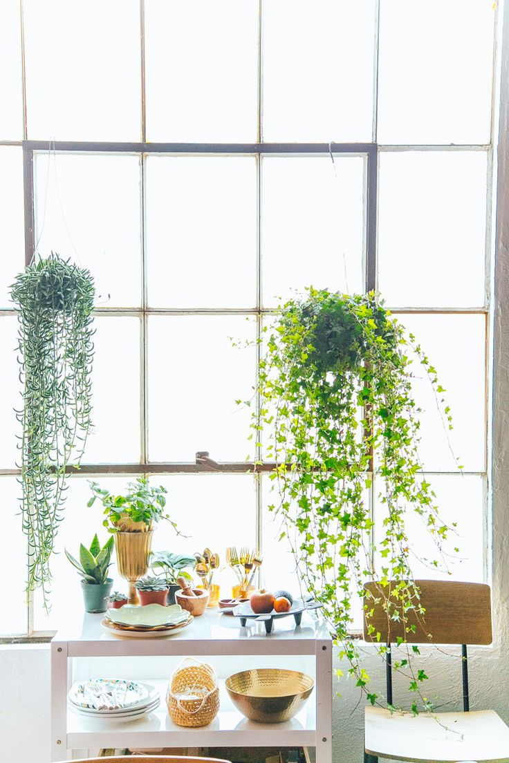 This studio is only 700 sq ft but high ceilings natural - How to hang plants in front of windows ...