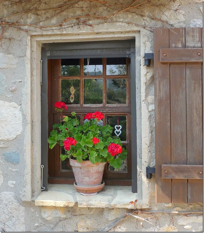 Red geraniums in a terra cotta pot in a window...