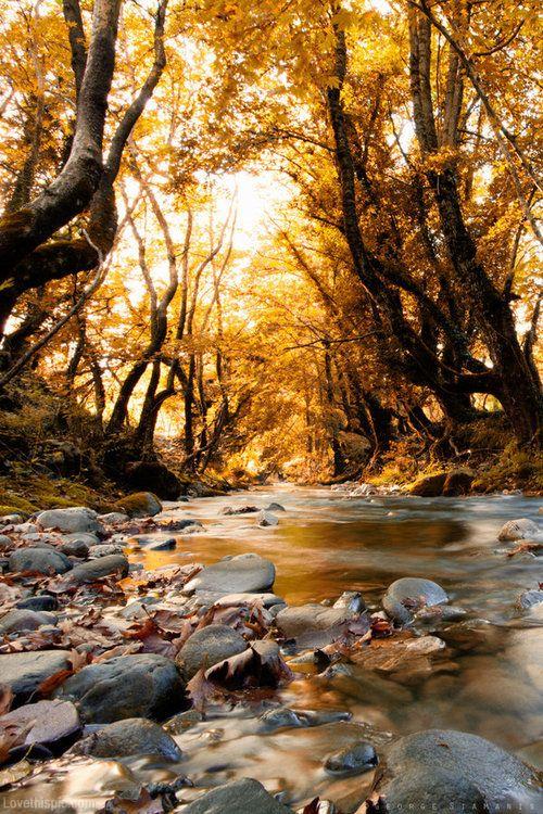 Golden autumn sky water sun trees autumn rocks gold