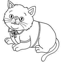 cachorro gato persa