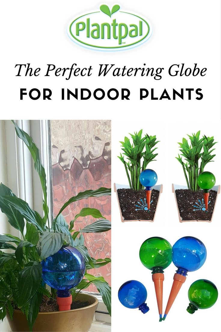 Plantpal Watering Globes Are A Quick And Easy Solution To Keep Your Plants Watered For Up To 2 Weeks Read On To Learn More Watering Globe Plants Water Plants