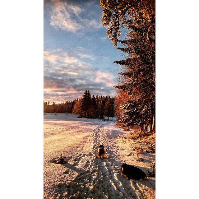 😘😘#natur #nature #skog #forest #träd #trees #himmel #sky #sol #sun #solnedgång #sunset #moln #clouds #färger #colors #skugga #shadow #blå #blue #vit #white #svart #black #orange #dag #day