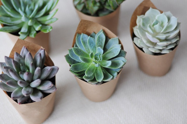 Simple Succulents for cocktail hour tables - can use kraft paper or even fancy cupcake liners