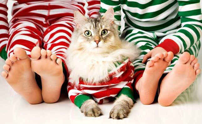 Add your cat to your family holiday card! Cat Christmas card ideas. May depend on the cooperativeness of your feline...