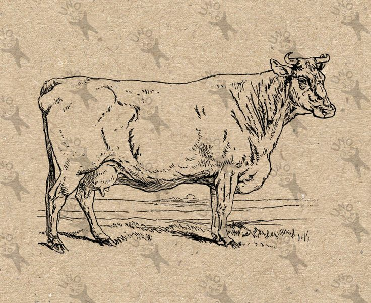 Vintage image Cow Instant Download Digital printable clipart graphic Burlap Fabric Transfer Iron On Pillows Totes Tea Towels etc HQ 300dpi by UnoPrint on Etsy  #hq #png #bw #Ephemera #diy #old #book #illustration #gravure #inspiration #retro #antique #vintage #300dpi #craft #draw #drawing  #black #white #printable #crafts #transfer #decor #hand #digital #collage #scrapbooking #quality