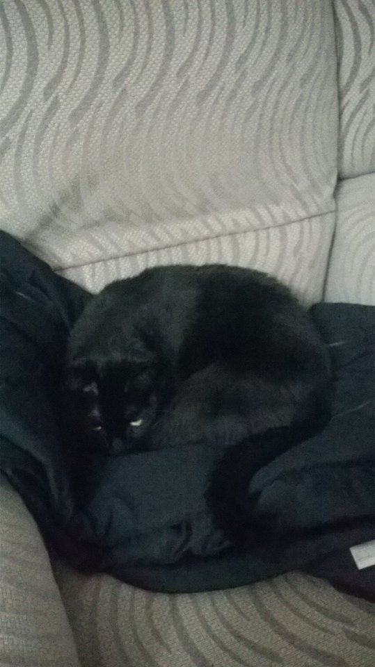 Salem camuflado