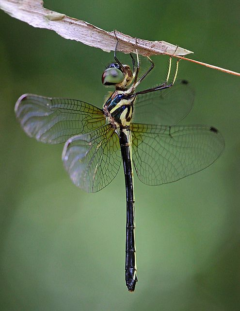 A Dragonfly ~ Up Close.