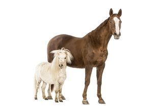 How to Care for a Miniature Horse | eHow