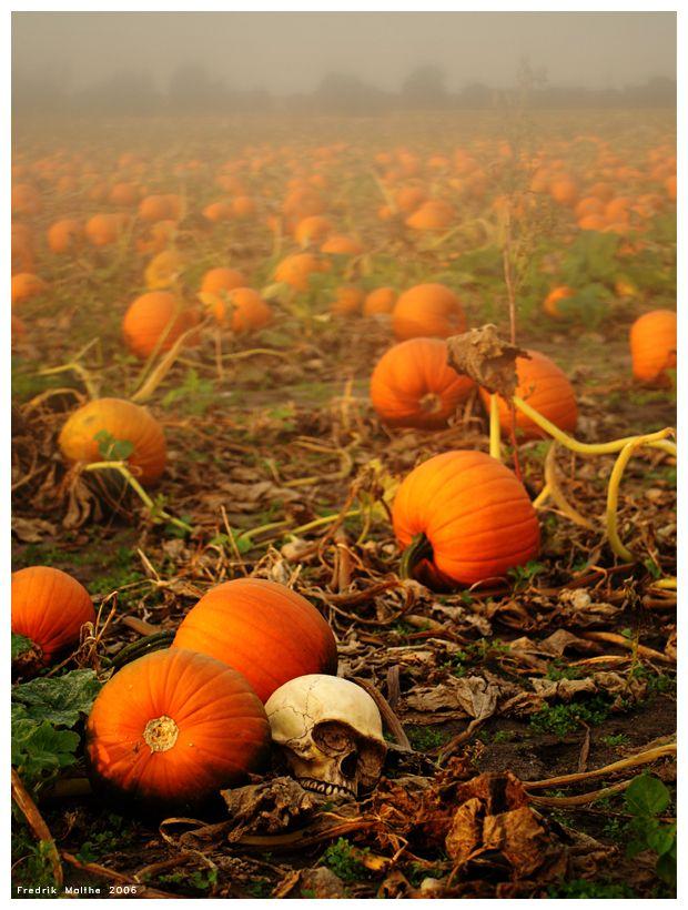 Must find a pumpkin patch