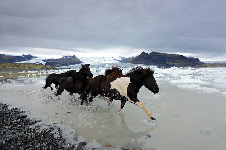 Thorsten Milse  Icelandic wild ponies gallop through the water at Landmannaleid, Iceland. Taken on a Canon EOS 6D with an EF16-35mm f/2.8L II USM lens at 18mm. The exposure was 1/800sec at f/5.6, ISO 1600.