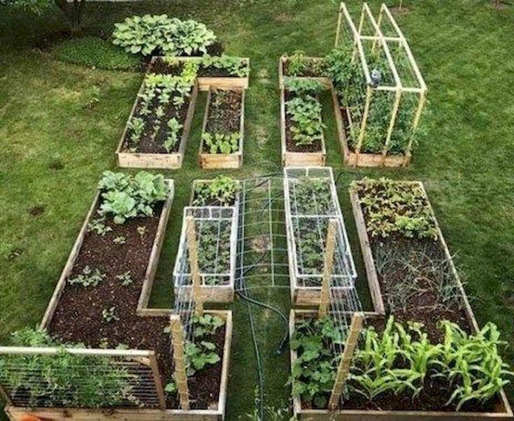60 Einfach zu probieren Gemüsegarten für Anfänger Design-Ideen
