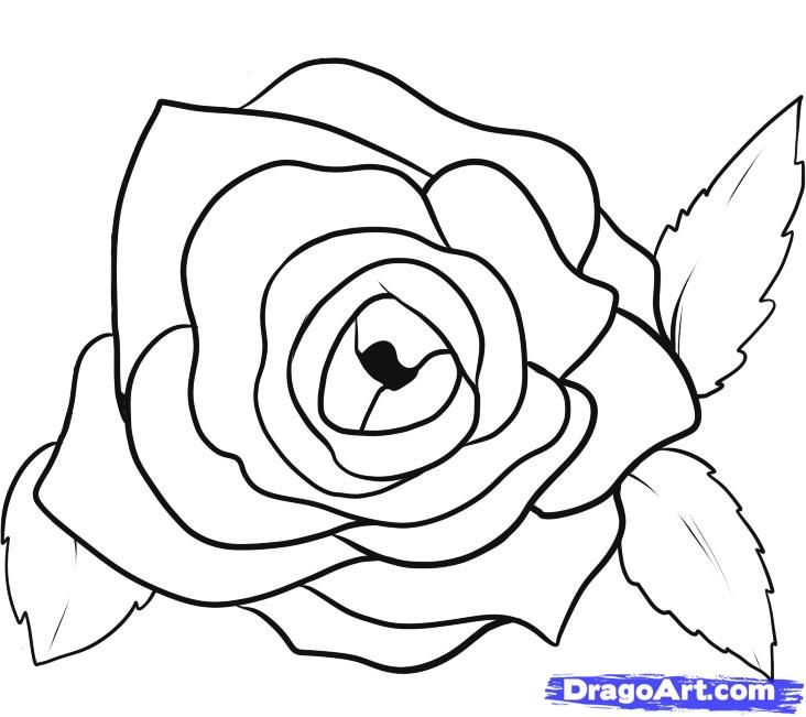 35 best images about how to draw roses on Pinterest ...