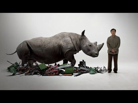 Find out what WildAid is doing to combat the killing off of earths Rhino, Elephants, Shark, Tigers, Pangolin... and more: www.WildAid.org - pledge your support now!