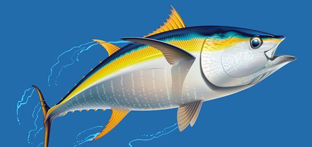tonnoLe due specie di tonno più diffuse sono il rosso e il pinna gialla. Pur essendo due esemplari della stesa famiglia, questi pesci crescono in ambienti molto diversi, il Mediterraneo e l'oceano rispettivamente.