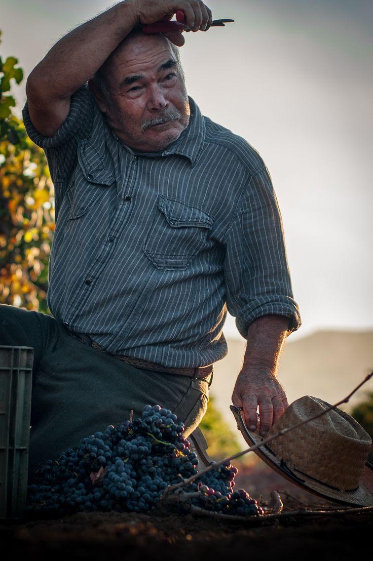 Baron Balche Winery, Valle de Guadalupe