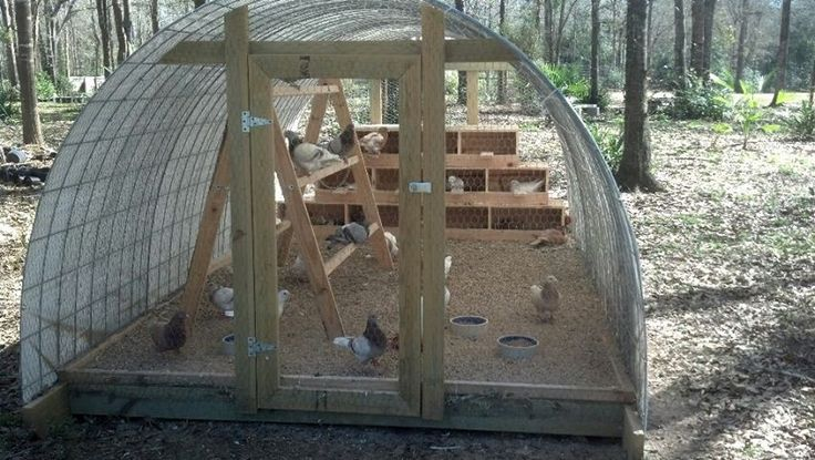 something like this would be great for raising meat birds or turkeys next year!